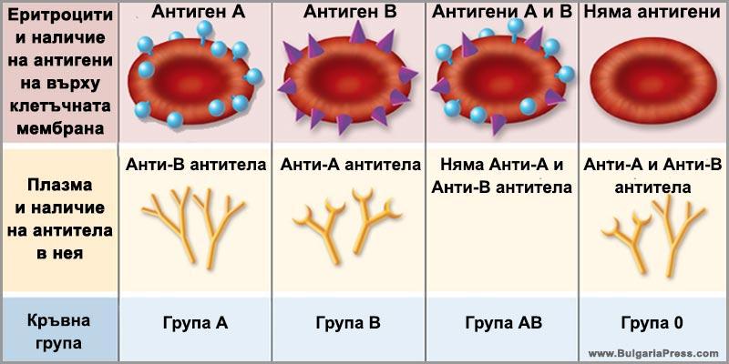 Видове кръвни групи